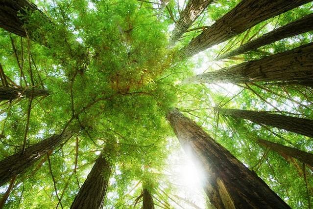 让我们重拾对森林的记忆,亲近自然,感受自然.